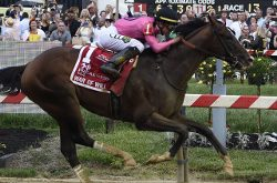 War of Will, ridden by Tyler Gaffalione, crosses the finish line first to win the Preakness Stakes horse race at Pimlico Race Course, Saturday, May 18, 2019, in Baltimore. (AP Photo/Mike Stewart)