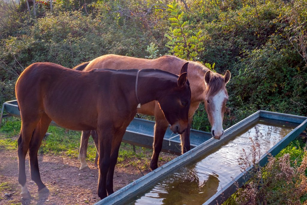 iStock-1057452634_2-horse-drinking-water-scaled-e1593094060712